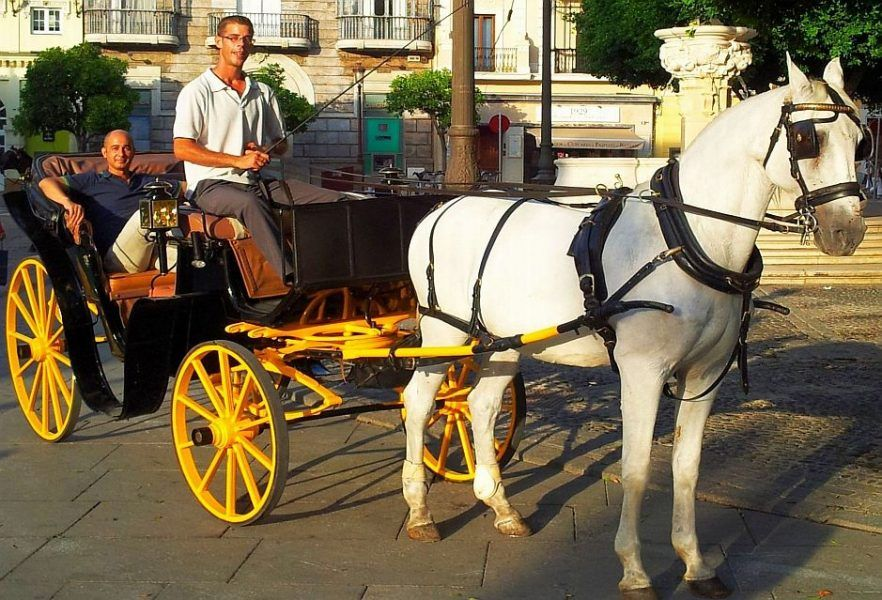 horse carriage ride seville